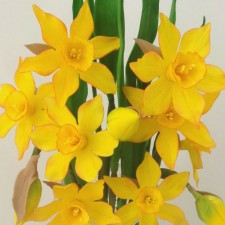Wired Upright Daffodil Tutorial